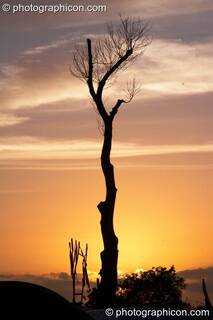 A bare tree trunk silhouetted against the setting sun at Glastonbury Festival 2008. Pilton, Great Britain. © 2008 Photographicon